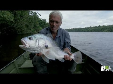 How to Turn a Nut into a Fish | River Monsters