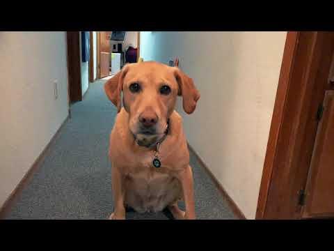 Taitava koira ja porkkanat – Ota koppi!
