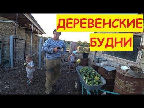 Деревенские будни / Ветер сломал дерево / Целая тачка огурцов / Семья в деревне