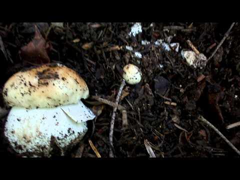 Trattamento di un fungo di ununghia allatto di nutrizione