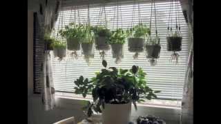 Garden | Herb Garden