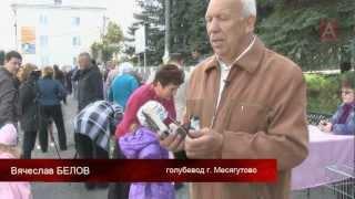 АВАНГАРД. Вторая городская выставка голубей 2012