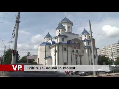 Trihirusa, adusă la Ploiești