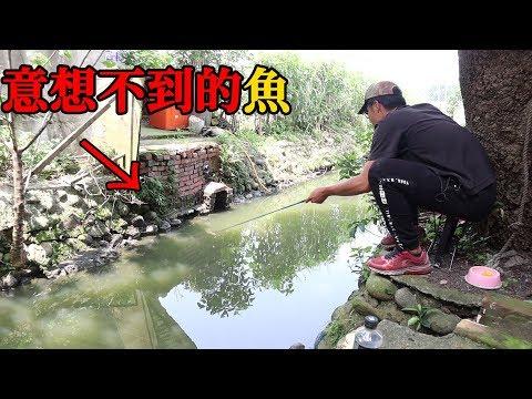 住家後面的排水溝,原來能釣到這種魚...【可以吃嗎?】