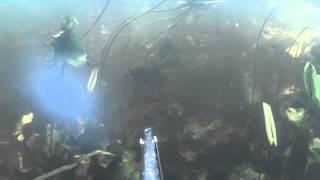 Это не аквариаум!!! Река Сейм, Сумская область... 3