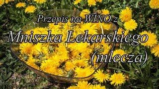 Przepis na Wino z Mniszka Lekarskiego (Mlecza) cz.1