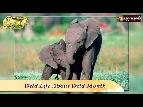 Wild-Life-about-Wild-Month-in-Iniyavai-Indru--10-08-2016-I-Puthuyugam-TV