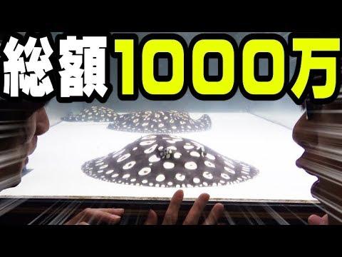 10,000,000円の魚の飼育がとんでもなく凄かった!!!【さえりコラボ#1】