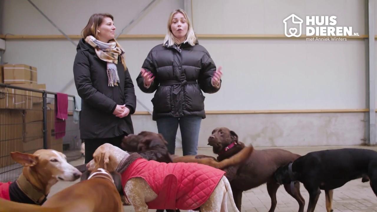 Huisdieren.nl en Anniek Winters | Opspringen