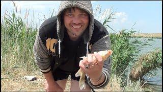 Рыбалка в ростовской области на маныче