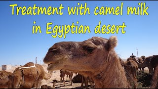 Treatment of camel milk and urine