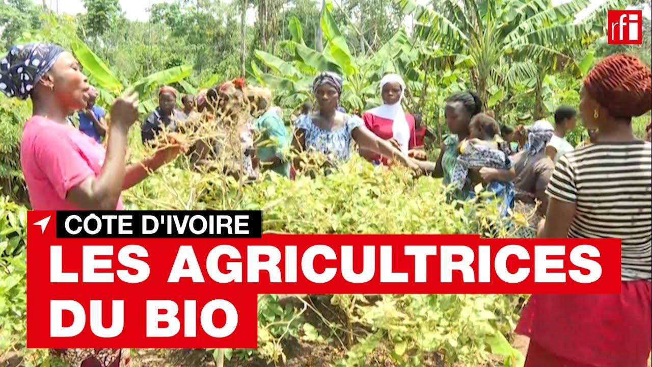 Côte d'Ivoire : les agricultrices du bio • RFI
