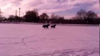 Our Miniature Donkeys, Myrtle and Agnes, Running in the Snow