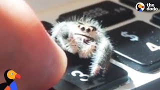 Adorable Spider Gives Dad High Fives | The Dodo