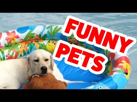 The Funniest Cutest Animal Home Video Bloopers | Funny Pet Videos
