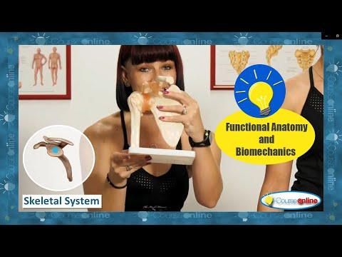 Ready to Learn Functional Anatomy & Biomechanics like Never Before?