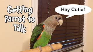 3 Tips on Getting Your Parrot to Talk