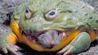 15 Animals That Eat Weird Things