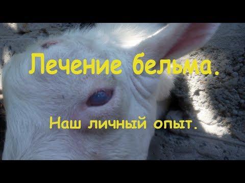 Лечение бельма. Как вылечить слепоту у животных. Наш личный опыт.