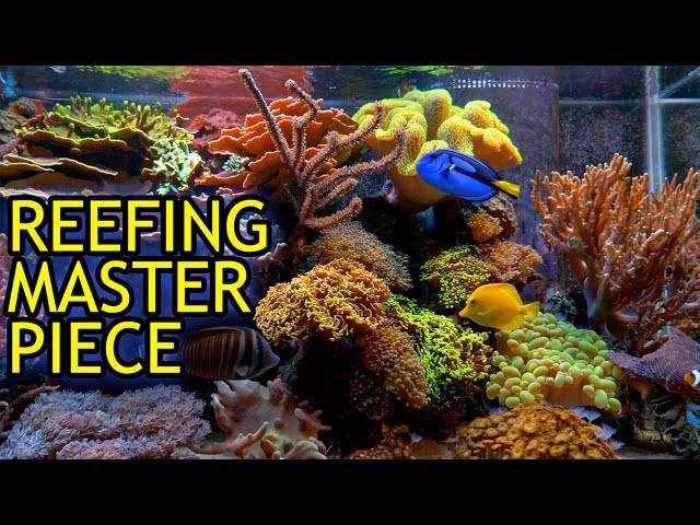 Amazing Show Reef Tank of Scott Anderson of Mile High Reefers