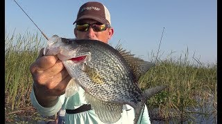 Crappie fishing in the thickest brush imaginable!!! {Catch Clean Cook}