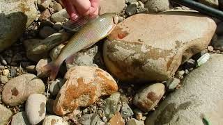 Рыбалка на реке муравейка приморский край