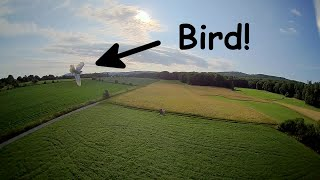 Bird almost crashed into my 220g drone! #fpv #drone #dronefails