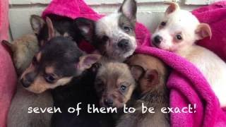 Heartbroken mother dog reunited with puppies