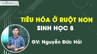 Tiêu hóa ở ruột non – Sinh học 8 – Thầy Nguyễn Đức Hải