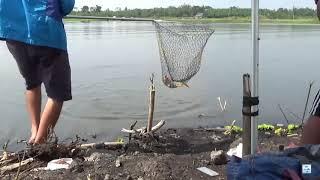 Chỗ này vẫn còn nhiều cá lắm - tha hồ mà câu cá nhé