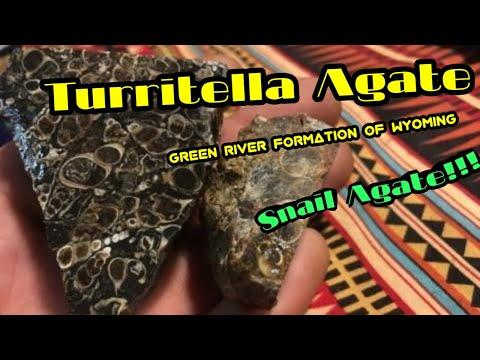Lapidary Time!! fun with Turritella Agate