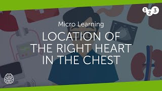 Where is the right heart located?