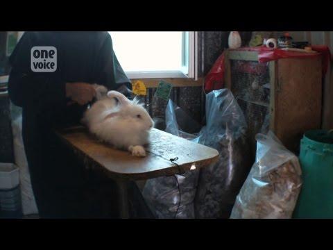 Pijma pour les lapins des helminthes