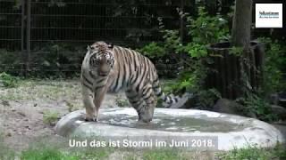 Tiger Stormi wird 1 Jahr alt