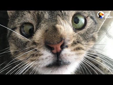 awesome cat with chromosome disorder never lets her differences hold her back the dodo