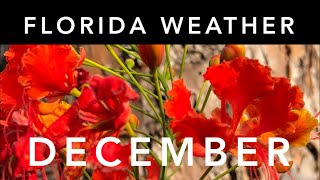 How is the weather in orlando florida in december