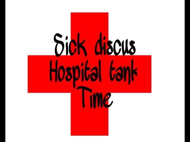 Sick discus fish hospital tank setup