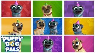 Bingo and Rolly's Birthday Music Video | Puppy Dog Pals| Disney Junior