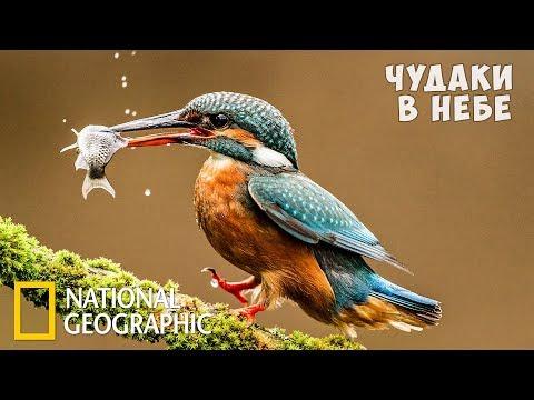 Самые странные животные в небе | (National Geographic)