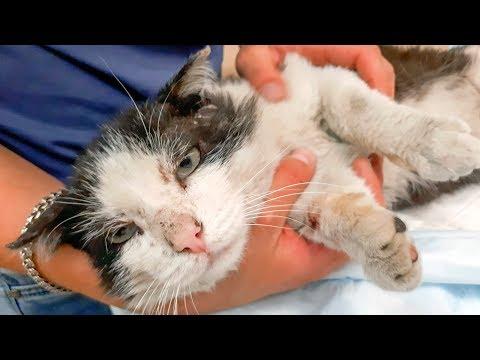 Бездомный кот обрадовался что его забирают с улицы Он все чувствует Едем спасать Кузю