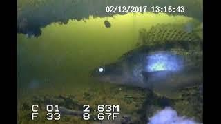 Рыбалка на дубовой в марий эл