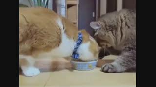 Кошаки непредсказуемы.Про кошек.\**おかしい猫