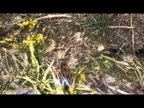 早春の小諸 OM-D(E-M5)動画テスト