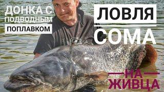 Про рыбалку ловля сома на живца