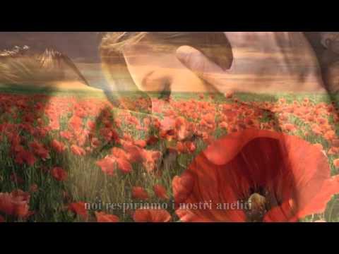 Riccardo Cocciante - Il mare dei papaveri (con testo)