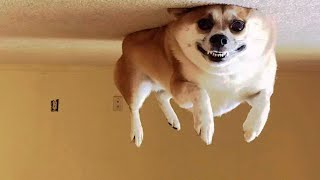 😂 Awesome Funny 🐶 Dogs And Cats 😸 -  Funniest And Cute Pet Videos