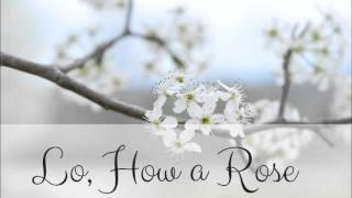 Lo, How a Rose E'er Blooming (SAT a Cappella Multitrack)