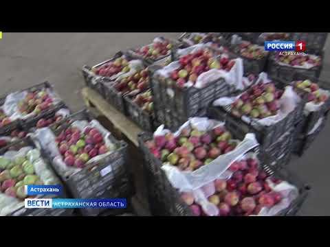 В Астраханской области специалисты Управления Россельхознадзора обнаружили карантинный объект в партии слив