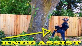 Pulling Massive Black Oak Against Lean (method explained)