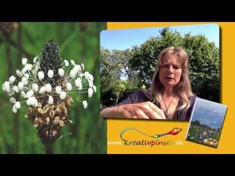 Erste Hilfe bei Insektenstichen und kleinen Wunden